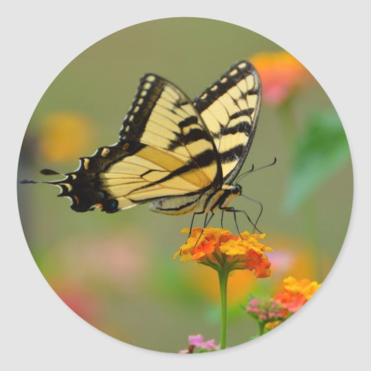 Eastern Tiger Swallowtail Butterfly Classic Round Sticker