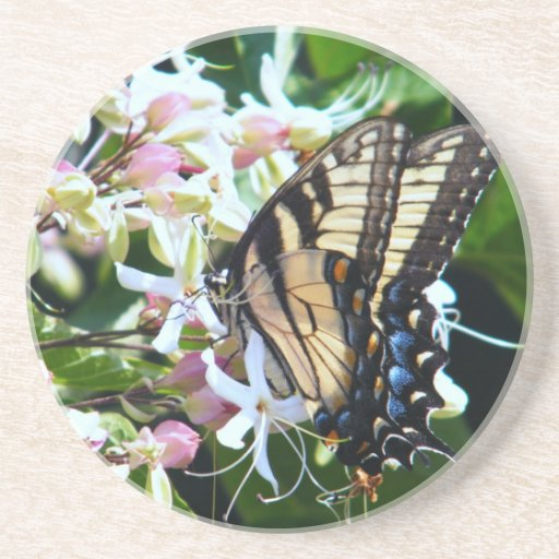 Eastern Tiger Swallowtail Butterfly Coaster
