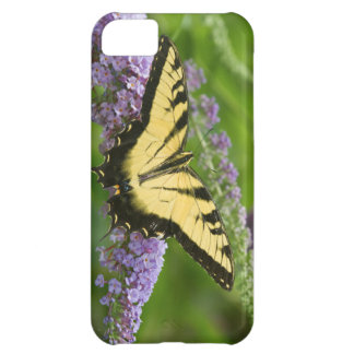 Eastern Tiger Swallowtail butterfly Cover For iPhone 5C