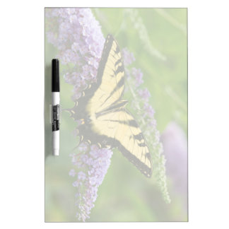 Eastern Tiger Swallowtail butterfly Dry Erase Board