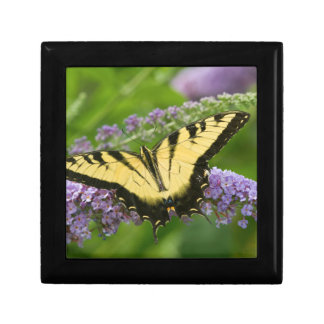 Eastern Tiger Swallowtail butterfly Gift Box
