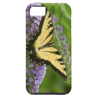 Eastern Tiger Swallowtail butterfly iPhone SE/5/5s Case