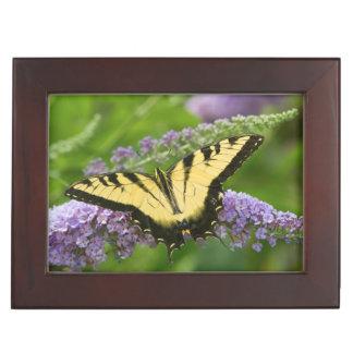 Eastern Tiger Swallowtail butterfly Keepsake Box