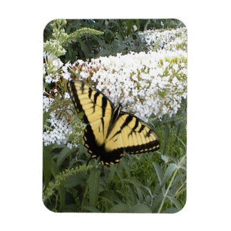 Eastern Tiger Swallowtail Butterfly Magnet