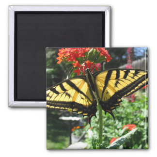 Eastern Tiger Swallowtail Butterfly Magnet Refrigerator Magnets