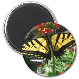 Eastern Tiger Swallowtail Butterfly Magnet Refrigerator Magnet