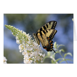 Eastern Tiger Swallowtail Butterfly Notecard