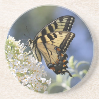 Eastern Tiger Swallowtail Butterfly photo coaster