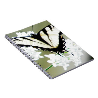 Eastern Tiger Swallowtail Butterfly Photo Notebook