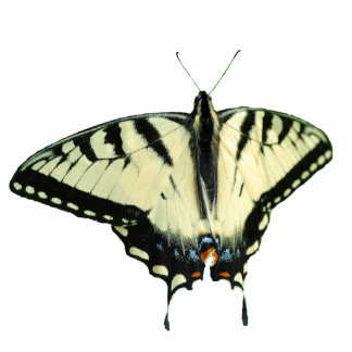 Eastern Tiger Swallowtail Butterfly pin Statuette