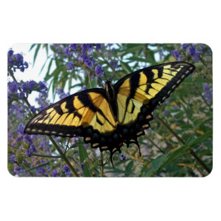 Eastern Tiger Swallowtail Butterfly Rectangular Magnets