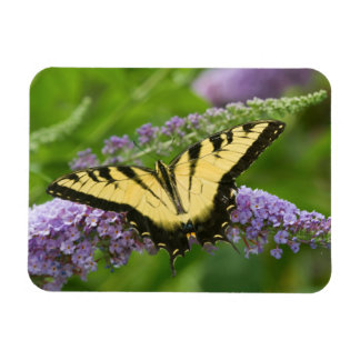 Eastern Tiger Swallowtail butterfly Rectangular Photo Magnet