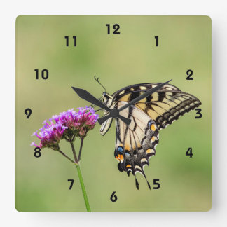 Eastern Tiger Swallowtail Butterfly Square Wall Clock