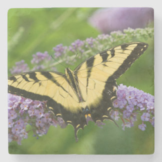 Eastern Tiger Swallowtail butterfly Stone Coaster