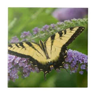 Eastern Tiger Swallowtail butterfly Tile