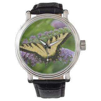 Eastern Tiger Swallowtail butterfly Watch