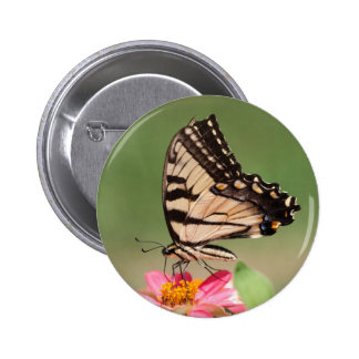 Eastern Tiger Swallowtail Pins