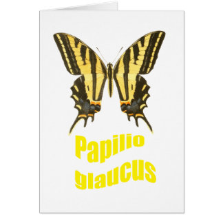 Eastern Tiger Swallowtail Card