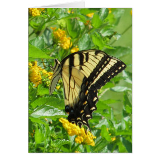 Eastern Tiger Swallowtail Cards