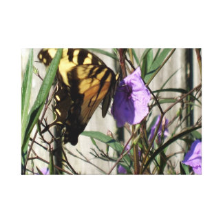Eastern Tiger Swallowtail in Mexican Petunias Canvas Print