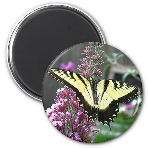 EASTERN TIGER SWALLOWTAIL magnet