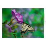 Eastern Tiger Swallowtail on Fresia - Sammamish Card