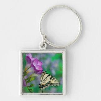 Eastern Tiger Swallowtail on Fresia - Sammamish Keychain