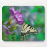Eastern Tiger Swallowtail on Fresia - Sammamish Mouse Pad