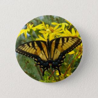 Eastern Tiger Swallowtail on Yellow Daisies Button