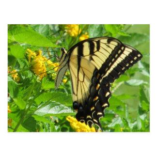 Eastern Tiger Swallowtail Postcard