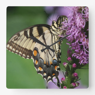 Eastern Tiger Swallowtail Wall Clock. Square Wall Clock