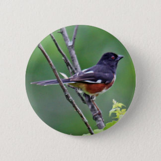 Eastern Towhee Button