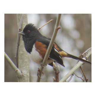 Eastern Towhee Panel Wall Art