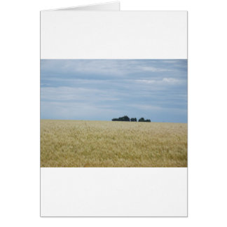 Eastern Washington Wheat Field Card