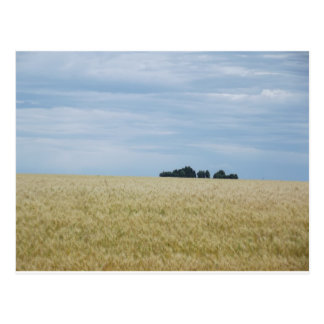 Eastern Washington Wheat Field Postcard