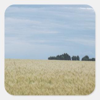 Eastern Washington Wheat Field Square Sticker