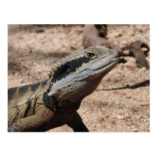 Eastern Water Dragon Postcard