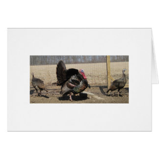 Eastern Wild Tom And A Couple Of Hens Greeting Card