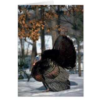 Eastern wild turkey, big gobbler strutting in snow greeting card