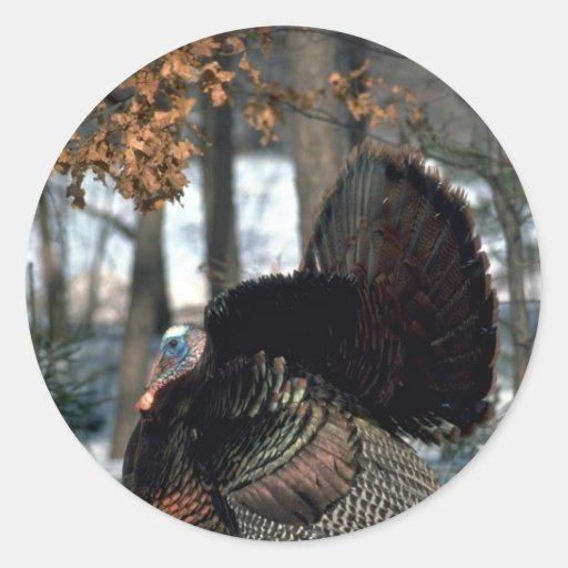 Eastern wild turkey, big gobbler strutting in snow round stickers