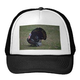 Eastern Wild Turkey Hat
