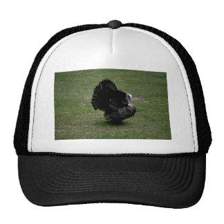 Eastern Wild Turkey Mesh Hat