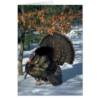 Eastern wild turkey, huge gobbler in full strut greeting card