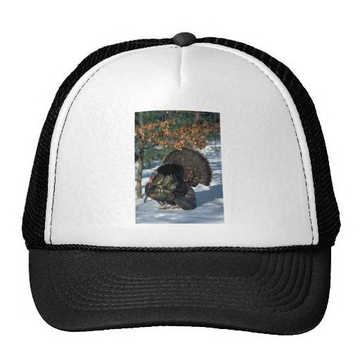 Eastern wild turkey, huge gobbler in full strut trucker hat