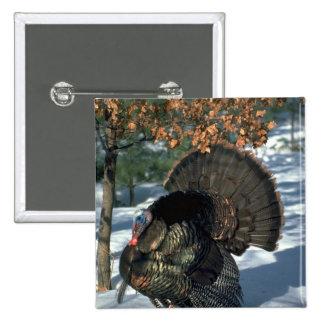 Eastern wild turkey, huge gobbler in full strut pinback button