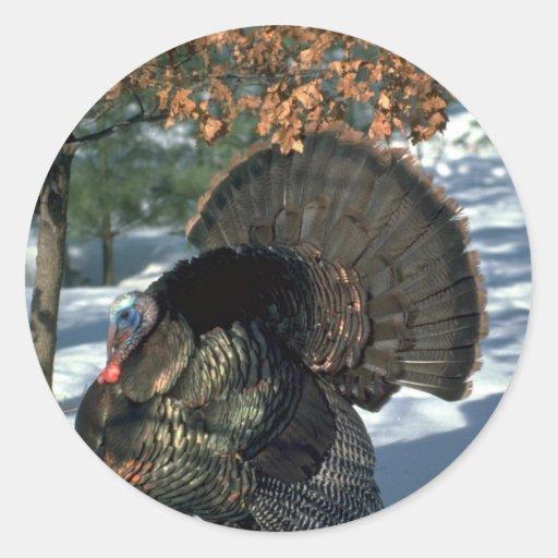 Eastern wild turkey, huge gobbler in full strut stickers