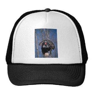 Eastern wild turkey, standing mesh hat