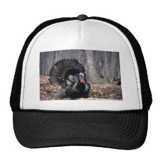 Eastern wild turkey strutting in woods trucker hat
