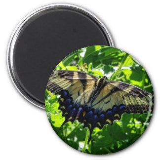 Eastern Yellow Swallowtail Butterfly Fridge Magnet