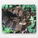 easterntimberrattler,  gilbertstetson.com mouse mat